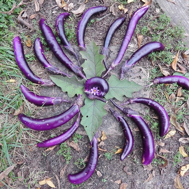 eggplant-mandala-christine-blog-linda-wiggen-kraft-blog