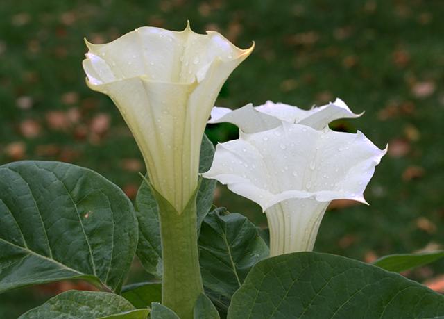 garden-goodnight-blog-linda-wiggen-kraft-blog
