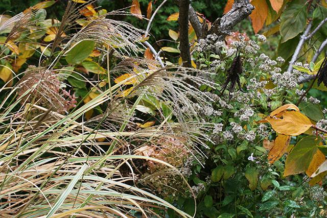 garden-goodnight-grass-blog-linda-wiggen-kraft-blog