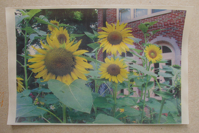 mandala-home-sunflowers-blog-linda-wiggen-kraft-blog