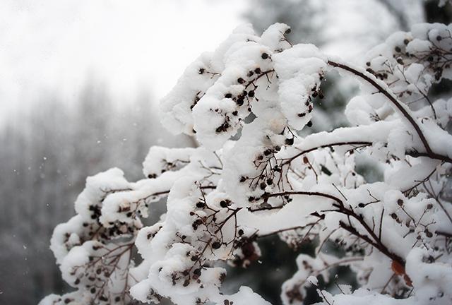 winter-snow-crape-myrtle-blog-linda-wiggen-kraft-blog