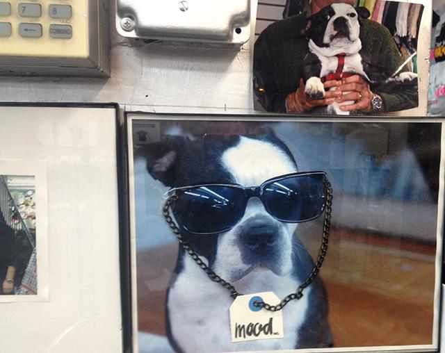mood-dog-swatch-blog-linda-wiggen-kraft-blog