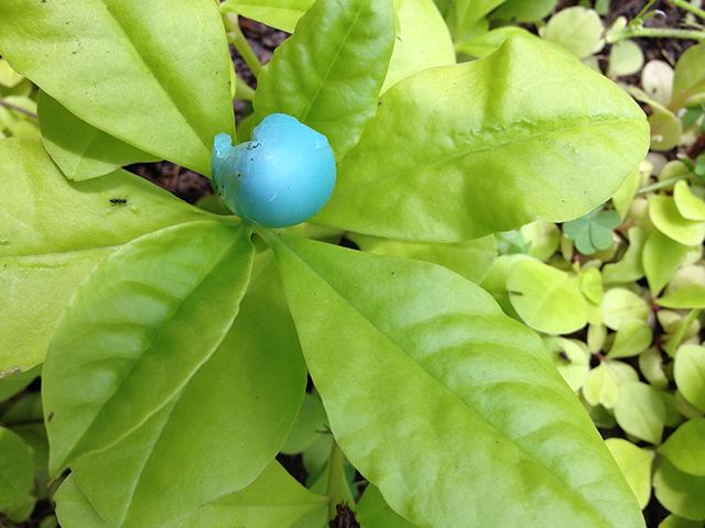 blue-robin-egg-chartruese-leaf-blog-linda-wiggen-kraft-blog