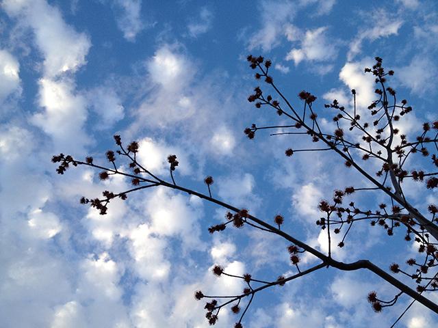 blue-sky-buds-blog-linda-wiggen-kraft-blog