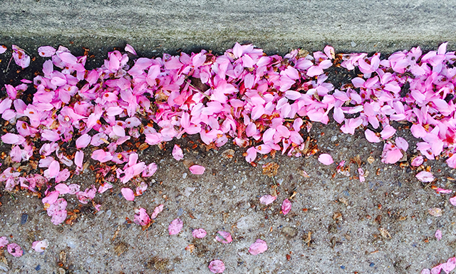 on-walk-pink-blossoms-in-gutter-photo-linda-wiggen-kraft-blog