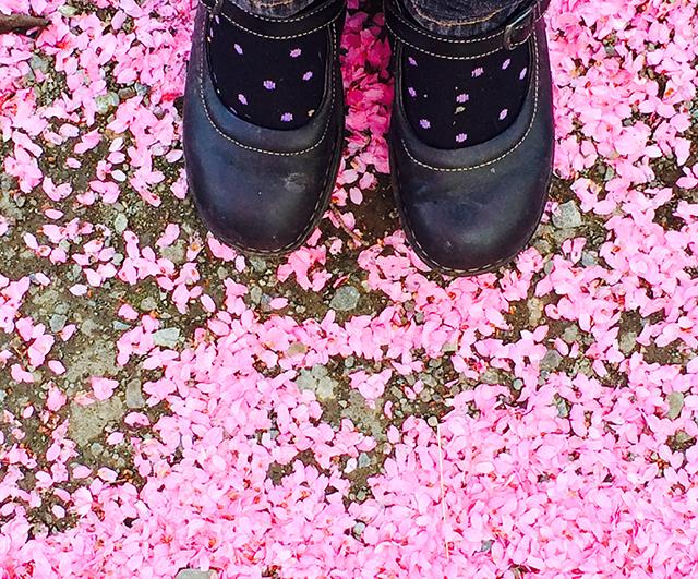 on-walk-pink-blossoms-shoes-photo-linda-wiggen-kraft-blog