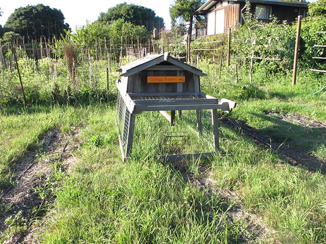 edible-schoolyard-chicken-tractor-blog-linda-wiggen-kraft-blog