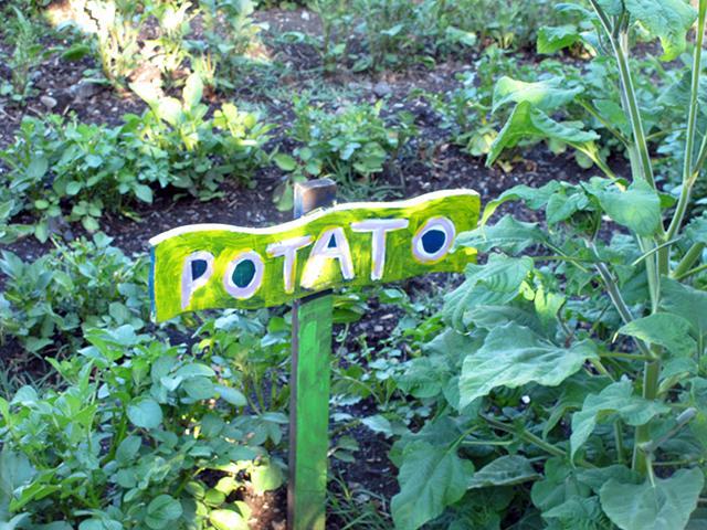edible-schoolyard-potato-sign-blog-linda-wiggen-kraft-blog