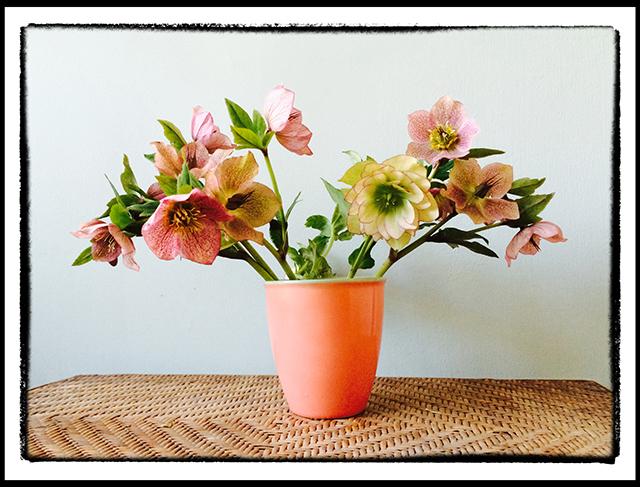 in-my-garden-4-15-14-peach-cup-blog-linda-wiggen-kraft-blog