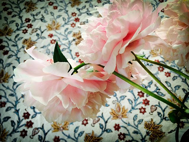 garden-may-29-14-blog-linda-wiggen-kraft-blog