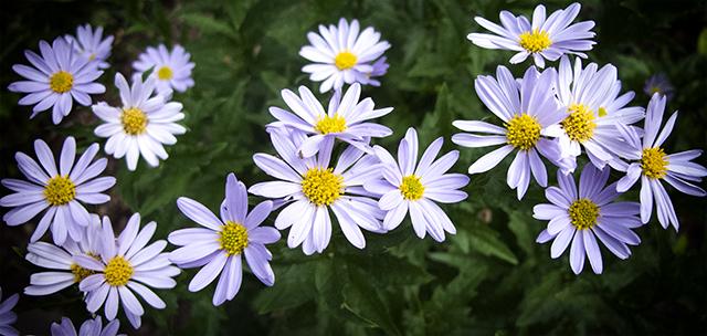 garden-may-29-14-kalameris-blog-linda-wiggen-kraft-blog
