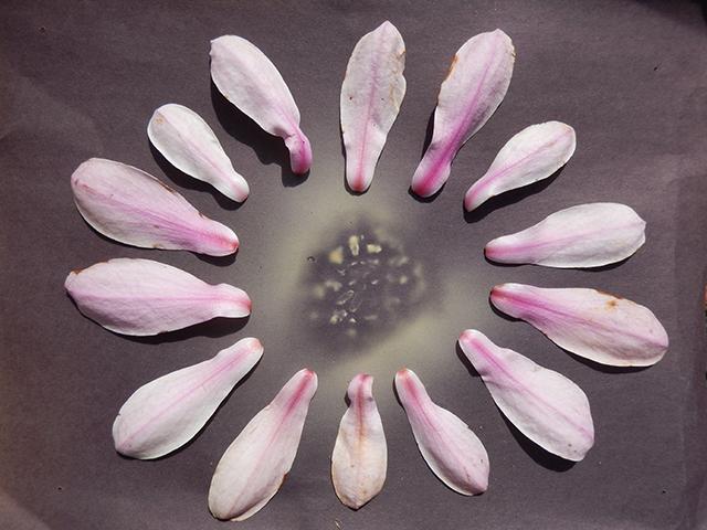 mandala-morel-spores-magnolia-petals-christine-blog-linda-wiggen-kraft-blog