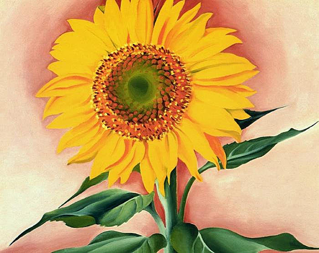 a-sunflower-from-maggie-georgia-okeefe-blog-creativity-for-the-soul-blog