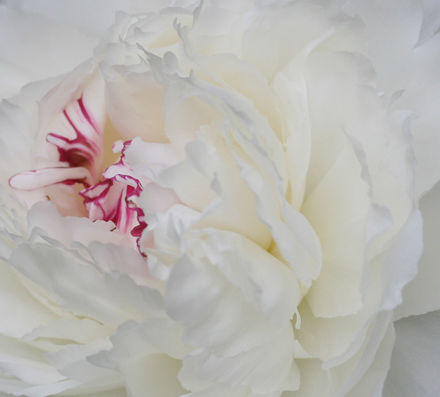 flower-edge-peony-blog-creativity-for-the-soul-photo-linda-wiggen-kraft-blog