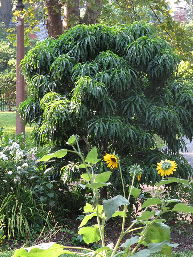 nectarine-tree-blog-creativity-for-the-soul-photo-linda-wiggen-kraft-blog