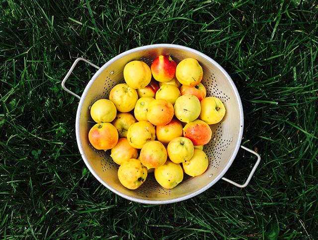 nectarines-bowl-blog-creativity-for-the-soul-photo-linda-wiggen-kraft-blog