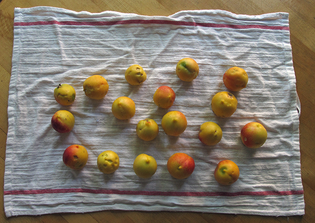 nectarines-ripe-on-cloth-blog-creativity-for-the-soul-photo-linda-wiggen-kraft-blog