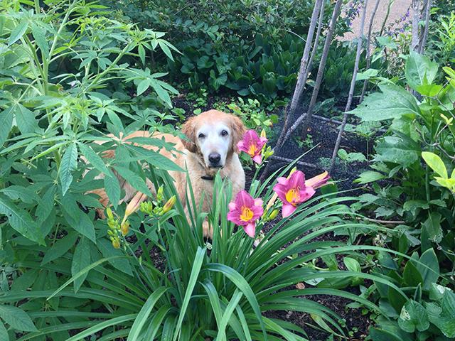 Sarah-in-garden-blog-creativity-for-the-soul-linda-wiggen-kraft-blog