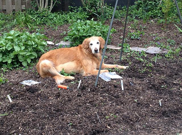 sarah-helping-plant-garden-blog-creativity-for-the-soul-linda-wiggen-kraft-blog
