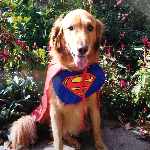 sarah-superdog-blog-creativity-for-the-soul-photo-linda-wiggen-kraft-blog