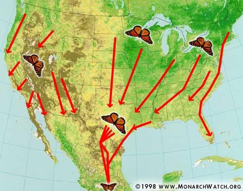 monarch-migration-fall-monarch watch