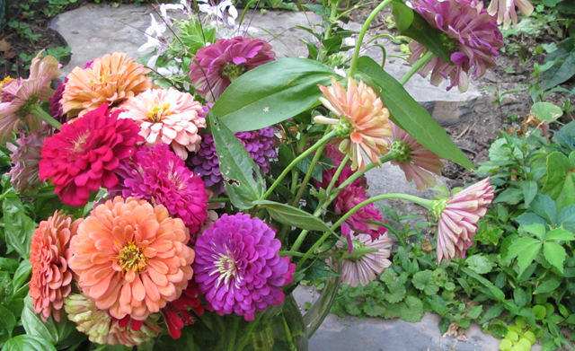 zinnias just cut from garden photo linda wiggen kraft
