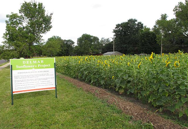 sunflower-delmar-field-sign-blog-creativity-for-the-soul copy