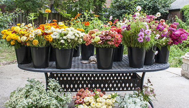 slow-flowers-flower-hill-farms-buckets-blog-creativity-for-the-soul-blog