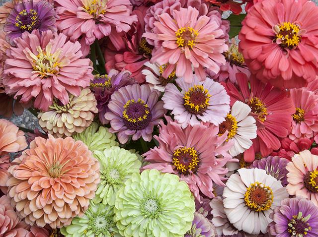 slow-flowers-zinnias-flower-hill-farm-blog-creativity-for-the-soul-blog