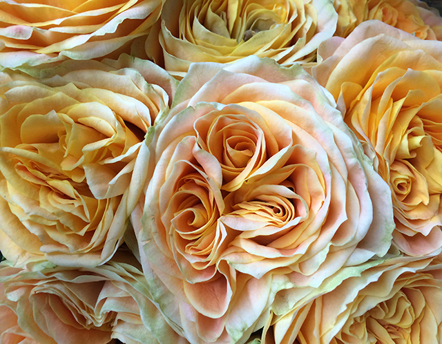 flower-fix-roses-1-blog-creativity-for-the-soul-blog