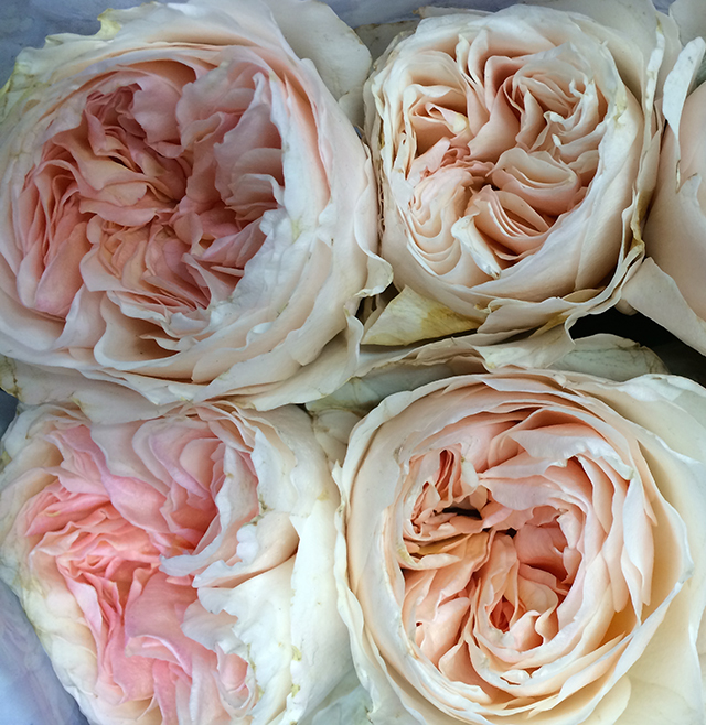 flower-fix-roses-2-blog-creativity-for-the-soul-blog