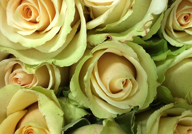 flower-fix-roses-green-blog-creativity-for-the-soul-blog