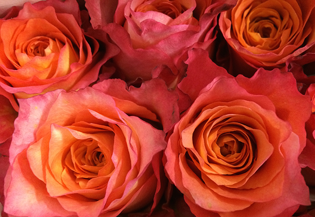 flower-fix-roses-orange-blog-creativity-for-the-soul-BLOG