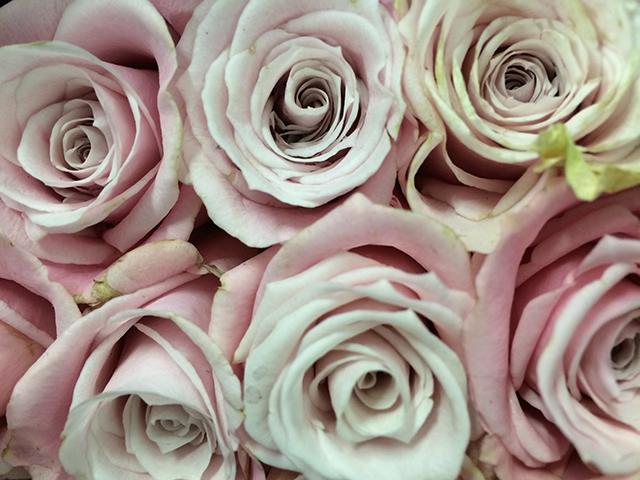 flower-fix-roses-pink-blog-creativity-for-the-soul-blog