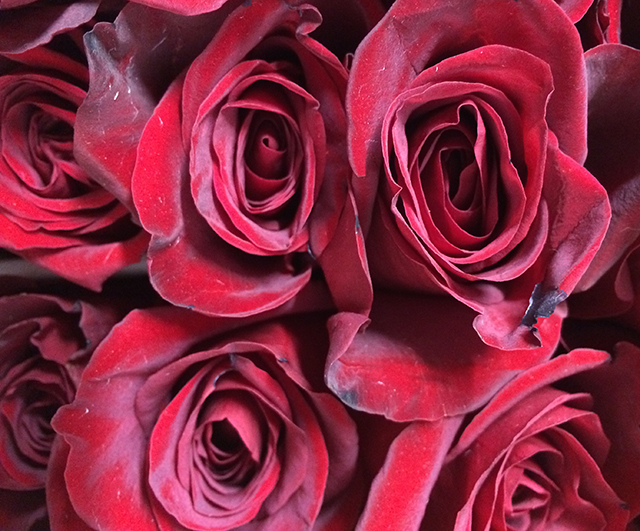flower-fix-roses-red-blog-creativity-for-the-soul-blog