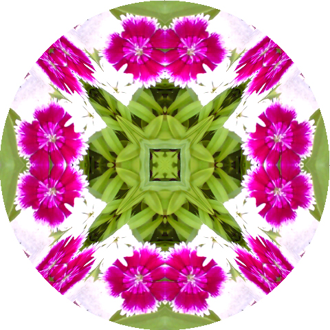 mandala-pink-carnations-blog-creativity-for-the-soul