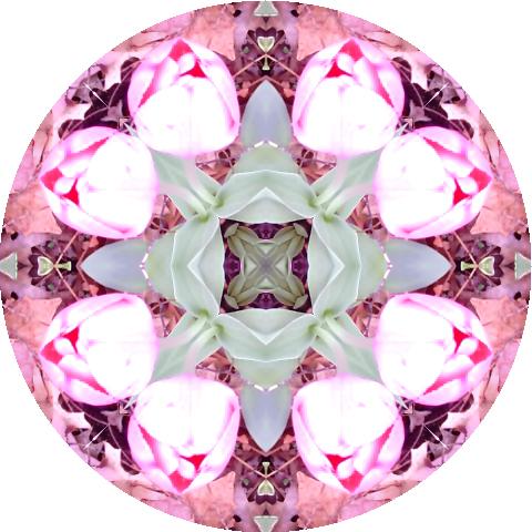 mandala-tulips-2-blog-creativity-for-the-soul