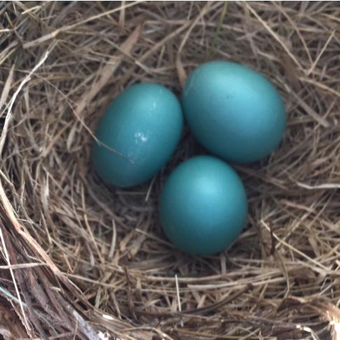 mandala-robin-eggs-nest-blog-creativity-for-the-soul