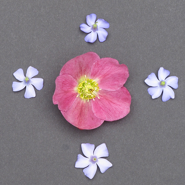 mandala-spring-flowers-1-blog-creativity-for-the-soul-photo-linda-wiggen-kraft-blog