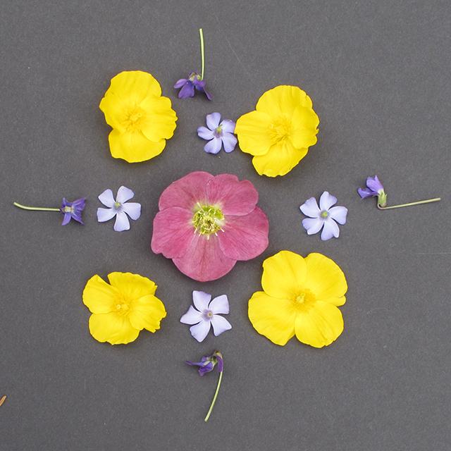 mandala-spring-flowers-2-blog-creativity-for-the-soul-photo-linda-wiggen-kraft-blog