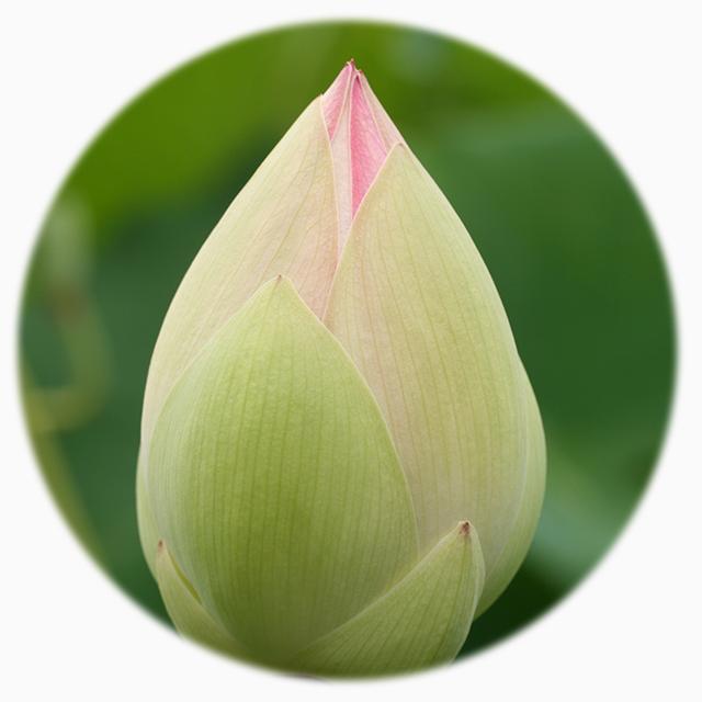 lotus-mandala-photo-8-blog-creativity-for-the-soul-blog