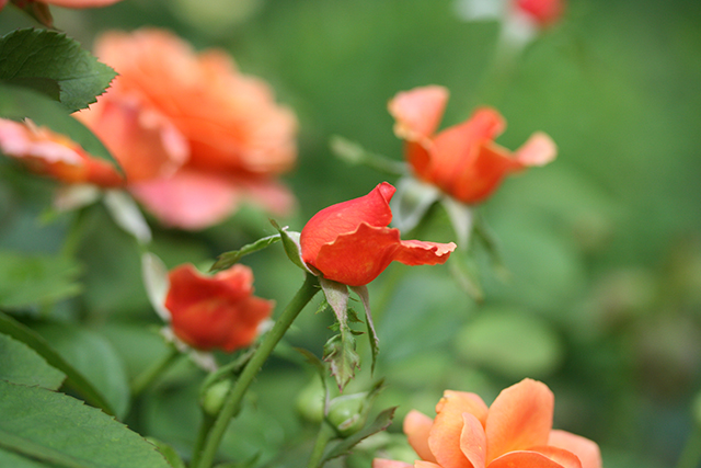 easy-does-it-roses-blog-creativity-for-the-soul-photo-linda-wiggen-kraft-blog