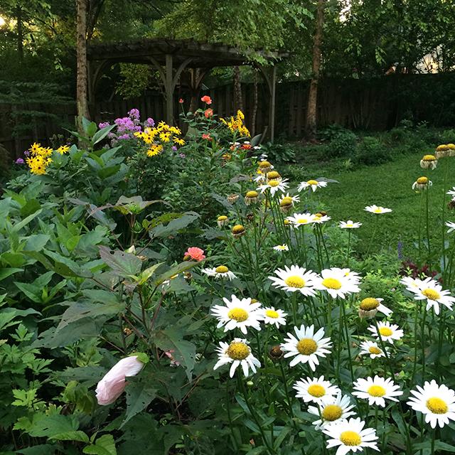 my-garden-back-8-23-15-blog-creativity-for-the-soul-blog
