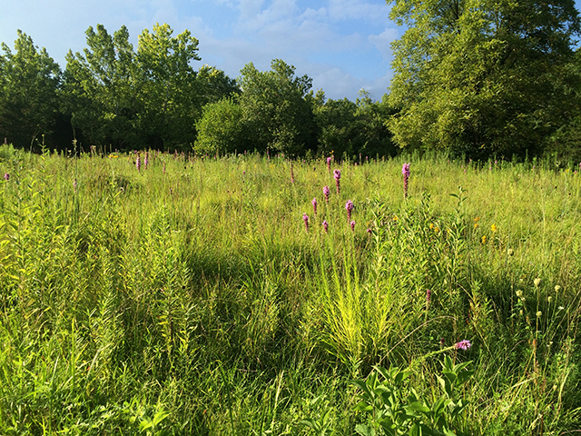 prairie-woods-sky-earth-mirrors-blog-creativity-for-the-soul-blog
