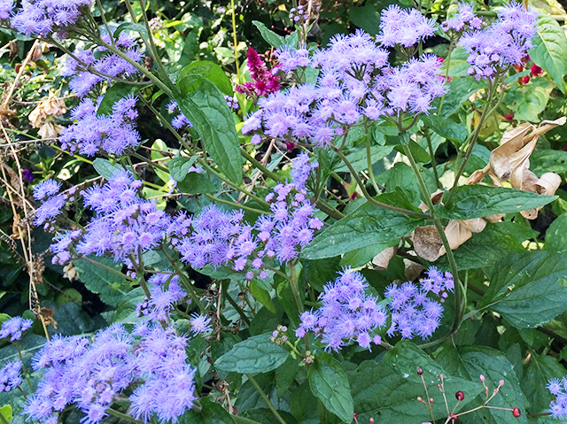 wild-things-ageratum-blog-creativity-for-the-soul-blog