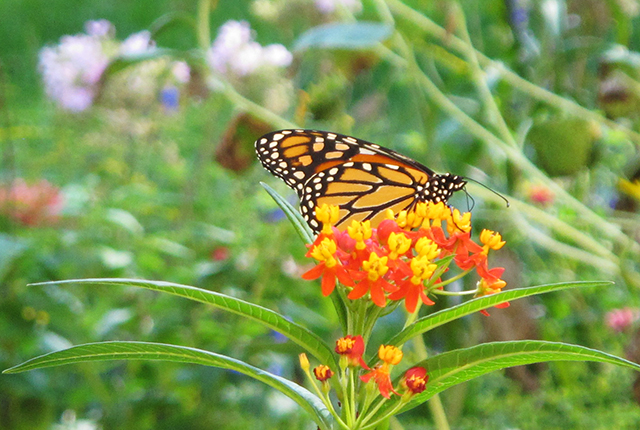 wild-things-monarch-blog-creativity-for-the-soul-blog