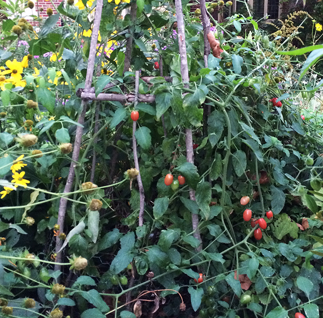 wild-things-tomatoes-blog-creativity-for-the-soul-blog