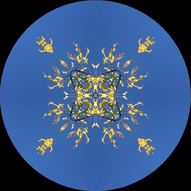 blue-sky-branches-yellow-leaf-kaleidagram-blog-creativity-for-the-soul-blog