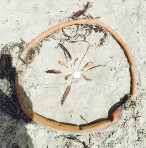 mandala-sand-dollar-beach-maryann-young-blog-creativity-for-the-soul copy