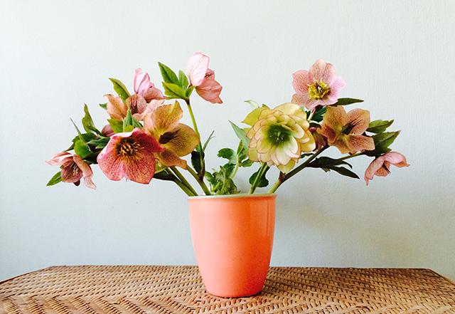 flower-vase-helleborus-blog-creativity-for-the-soul-blog